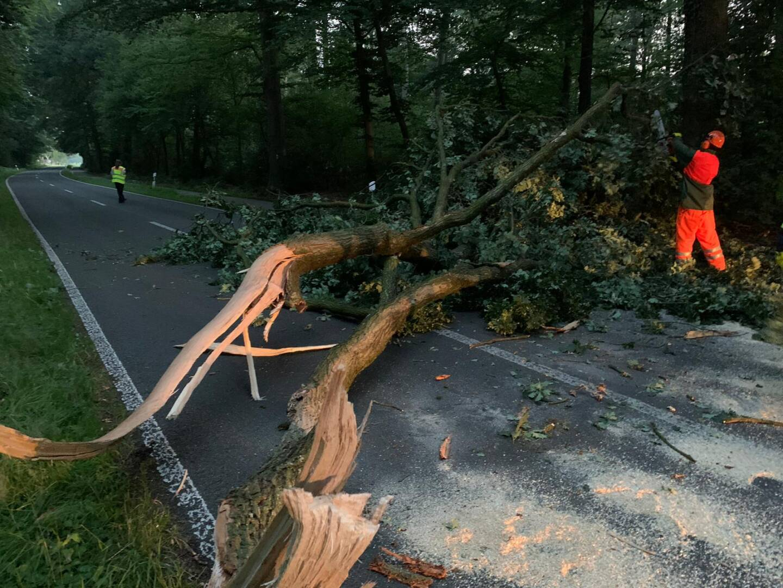 Mittels Motorkettensäge konnte der Baum entfernt werden