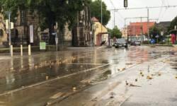 Kartoffel nach Regen auf Strasse