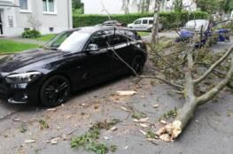 Baum nach Sturm auf PKW