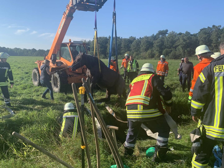 Das Pferd wird aus dem Graben gehoben